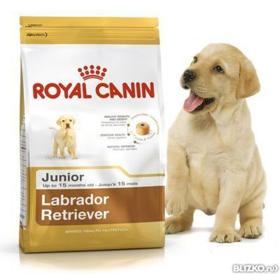 Корм royal canin labrador retriever junior